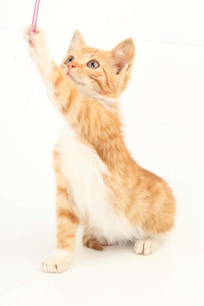 drobné mladé plešatý mačička dwnlod porno video